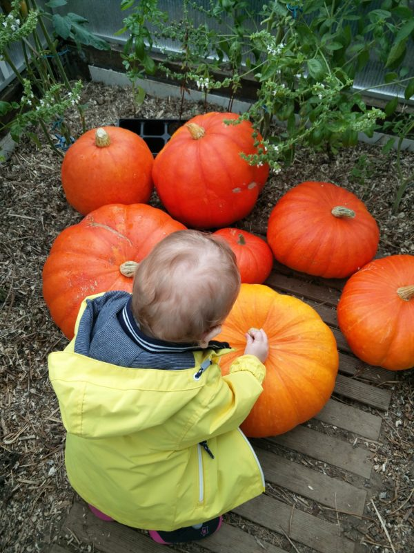 Baby and pumkins